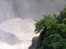 дождевый лес тропический Стоковое фото RF