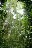 дождевый лес Стоковое Изображение RF
