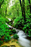 дождевый лес Стоковые Изображения RF