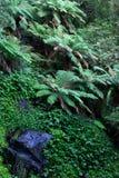 дождевый лес Стоковые Фотографии RF