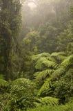 дождевый лес Стоковое фото RF