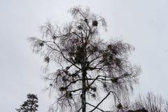 Дождливый день и дождевые капли на ветви дерева Стоковые Фото