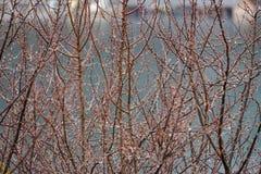 Дождливый день и дождевые капли на ветви дерева Стоковые Фотографии RF