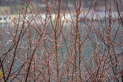 Дождливый день и дождевые капли на ветви дерева Стоковая Фотография RF