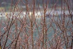 Дождливый день и дождевые капли на ветви дерева Стоковые Изображения