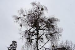 Дождливый день и дождевые капли на ветви дерева Стоковые Изображения RF