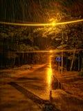 Дождливый лес прогулки ночи стоковые фотографии rf