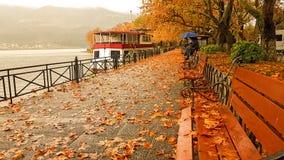Дождь выходит деревья в зиму Греции города Янины Стоковые Изображения
