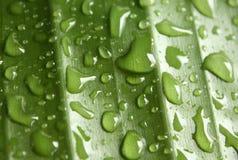 дождь геометрии Стоковая Фотография RF