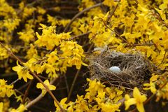 дождь гнездя птиц золотистый Стоковые Изображения RF