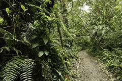 дождь джунглей зеленого цвета пущи Амазонкы тропический стоковое изображение rf