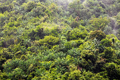дождь джунглей Стоковое Изображение RF