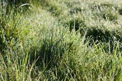 дождь зеленого цвета травы стоковая фотография