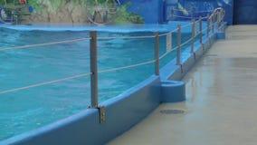 Дождь и волны в бассейне