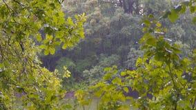 Дождь лета в лесе на реке видеоматериал