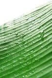 дождь листьев банана стоковое фото
