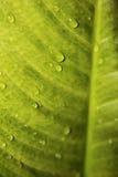 дождь листьев капек Стоковые Изображения RF