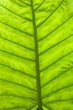 дождь листьев пущи стоковые изображения rf