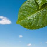 дождь листьев Стоковое фото RF
