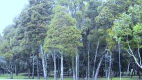 Дождь на сезоне зимы леса сток-видео