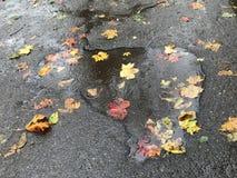 Дождь осени Стоковое Изображение