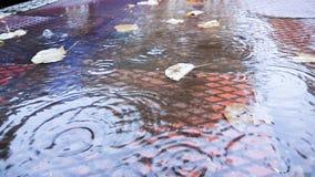 Дождь падает осень b пульсаций листьев Стоковое Изображение