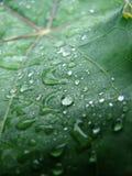 дождь падений Стоковое Фото