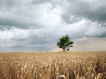 дождь поля Стоковые Изображения RF