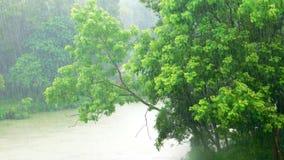 Дождь & природа Стоковые Фото