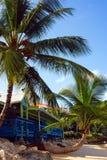 дождь пущи Барбадосских островов Стоковые Фотографии RF