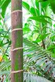 дождь пущи предпосылки древний тропический Стоковое Изображение