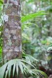 дождь пущи предпосылки древний тропический Стоковое фото RF