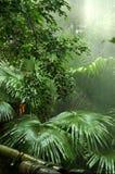 дождь пущи Стоковое фото RF
