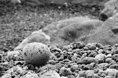 Дождь распылил вокруг камня на пляже, накидки Sutil, острова ванкувер, Британской Колумбии Стоковое Изображение RF