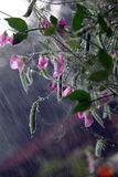 дождь травы Стоковые Фото