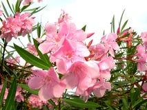 дождь цветка Стоковое Изображение RF