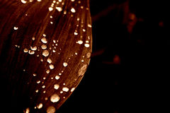 дождь цветков Стоковые Изображения
