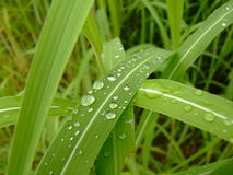 дождь стоковые фото