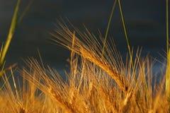 дождь beofre Стоковые Фото