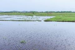 Дождевая вода в поле риса перед осеменяя сезоном Стоковая Фотография