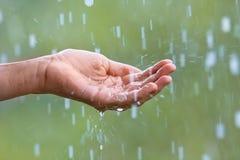 Дождевая вода Стоковые Фото