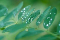 Дождевая капля на листьях Стоковая Фотография RF