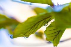 Дождевая капля на лист Стоковые Фото