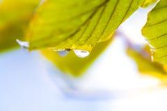 Дождевая капля на лист Стоковая Фотография