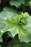 Дождевая капля II Стоковые Фото