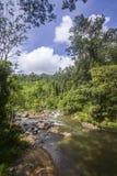 Дождевой лес в запасе леса Sinharaja, Шри-Ланке стоковые изображения