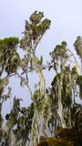 Дождевой лес в национальном парке Килиманджаро Стоковые Фотографии RF