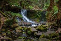Дождевой лес на острове Тасмании Стоковое Изображение RF