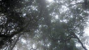 Дождевой лес лотка Kiew Mae Стоковая Фотография