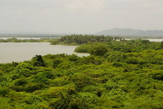 Дождевой лес отраженный в водах, на негре Рио в тазе Амазонкы, Бразилия, Южная Америка Стоковая Фотография